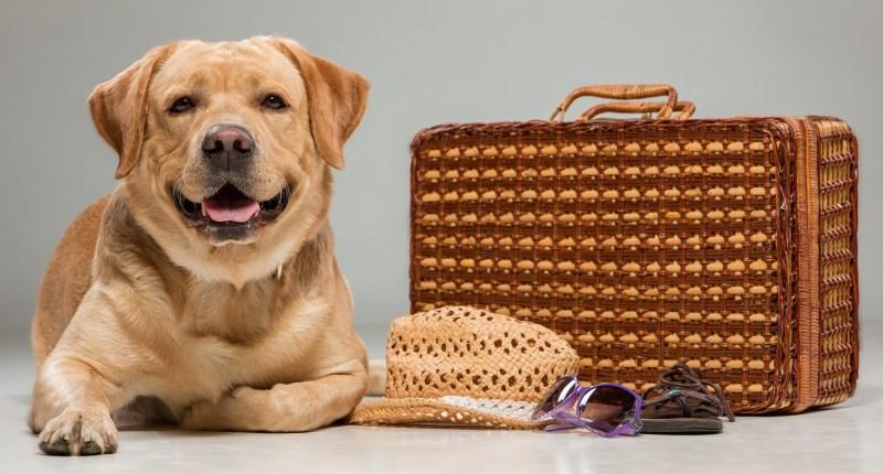 assicurare il cane
