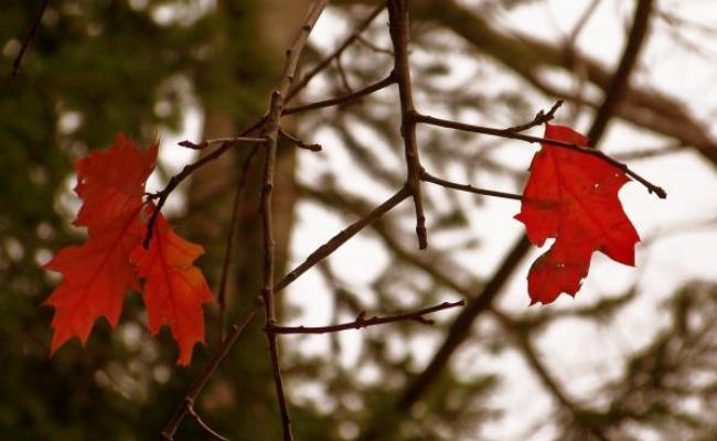 autunno sugli alberi le foglie