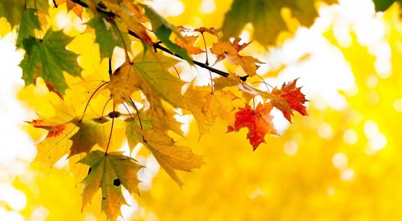 come d'autunno sugli alberi